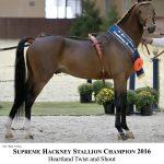 champion stallion 2016